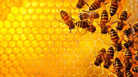 Σε κίνδυνο το 75% των καλλιεργειών από την εξαφάνιση των μελισσών